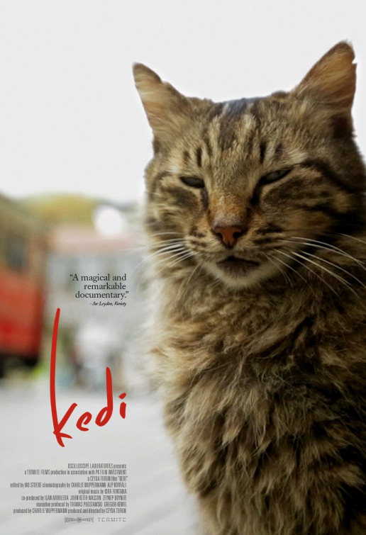 kedi-film-poser2
